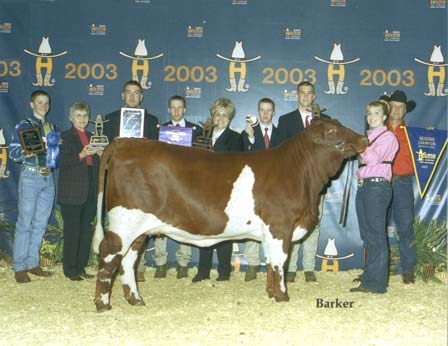 2003 Houston Livestock Show - Reserve Champion