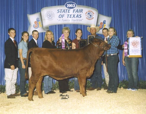 2003 State Fair of Texas Calf Champion and Class Winner & 2003 State Fair of Texas Reserve Bred and Owned Champion